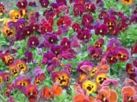 Fleurs en libre service